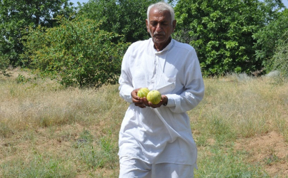 Indian farmer develops fruit farm in Indian desert