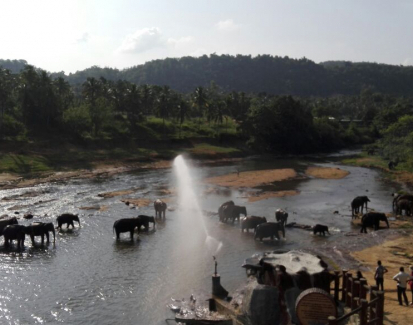 Saving Sri Lanka's critically endangered elephants