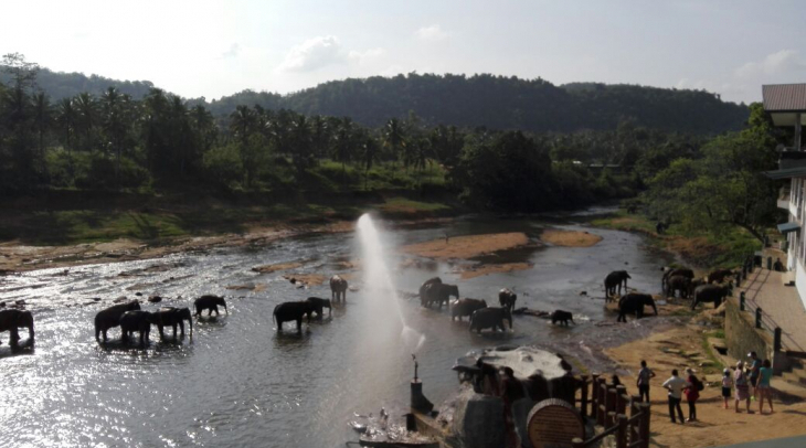 At  Pinnawala Elephant Orphanage, Sri Lanka. (Photo: Naeem Sahoutara)