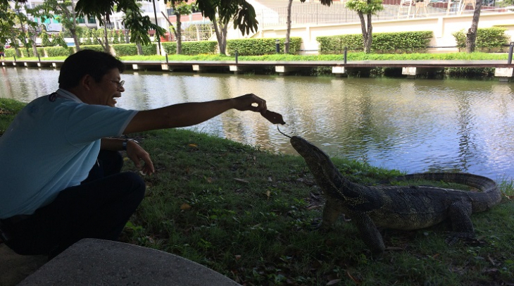 Asian water monitor lizards spend their time in Bangkok's Lumpini Park, and are now under threat (Ph