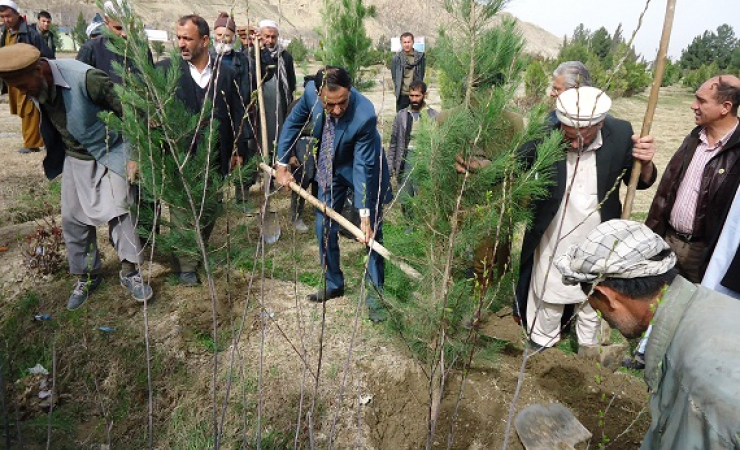 Afghan government lauched a nation wide tree plantation on nawroz. (Photo: Shadi Khan Saif)