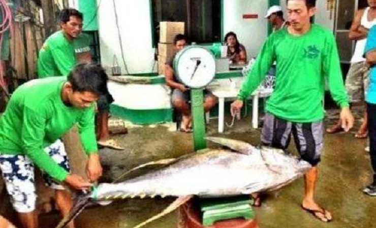 The Philipppines sustainable tuna industry. (Photo: Madonna Virola)